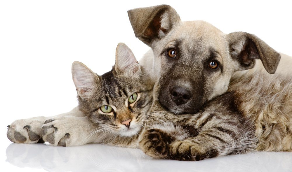 Legalease Dog and Cat