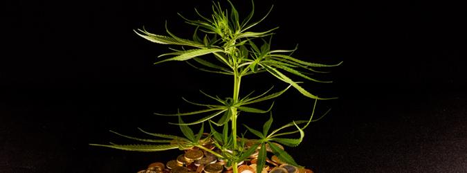 JRNL_NovDec21_AttorneyProfForum-RecreationalMarijuana_675